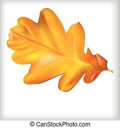 oak leaf vector illustration