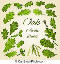 Oak leaves and acorns vector - Oak leaves and acorns nature ...