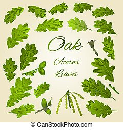 Oak leaves and acorns vector.eps
