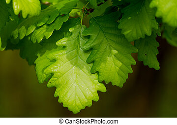 Beautiful, harmonious forest detail, with oak leaves