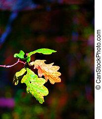 Oak leaves in autumn