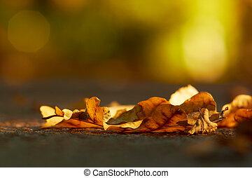 Oak leaves on asphalt at autumn season, extreme closeup.
