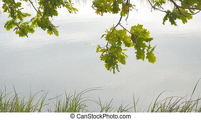 Oak leaves on background of quiet lake water - Oak leaves on...