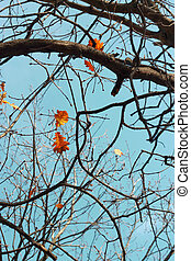Oak leaves on the branch of the tree
