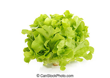 oak lettuce on white background