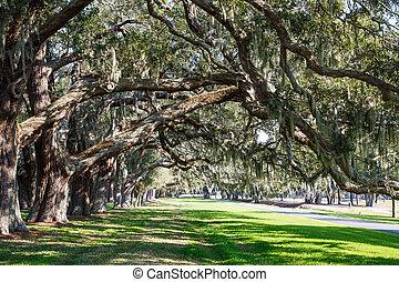 Oak Limbs over Green Grassy Lane