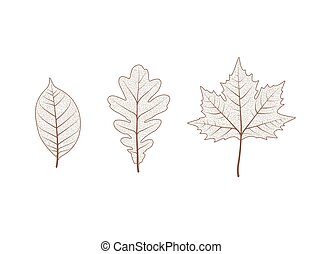 Oak maple tree leaf set. Autumn leaves isolated vector illustration on white background. Fall decoration clip art