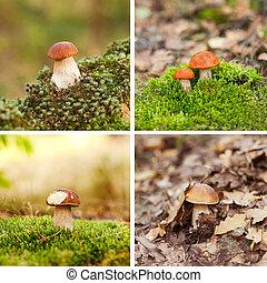 Oak Mushrooms in the moss