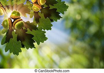 oak., resumen, natural, fondos