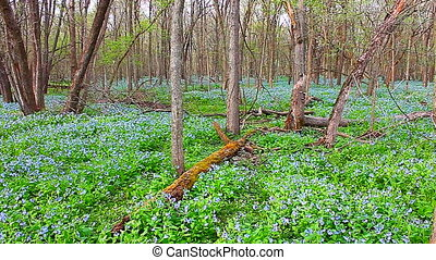 Oak Ridge Forest Preserve Illinois - Spring wildflower...