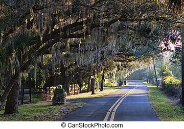 Oak shaded street at sunrise. The images shows a lightly winding Florida road with a canopy of live oak trees just after sunrise.