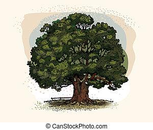 A single oak tree on a beautiful day