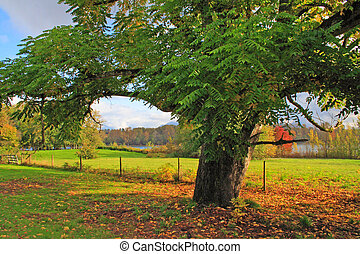 Oak Tree Along River and Pasture in Fall