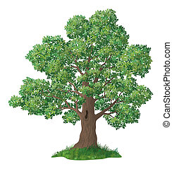 Oak tree with leaves and green grass, isolated on white background.
