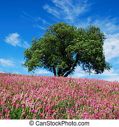 Oak tree and pink flowers