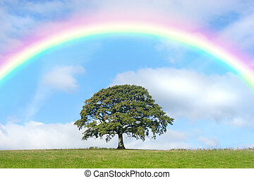 Oak Tree and Rainbow Beauty - Oak tree in summer standing...