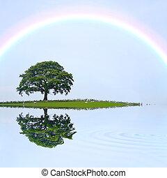 Oak Tree and Rainbow - Oak tree on an island field in summer...