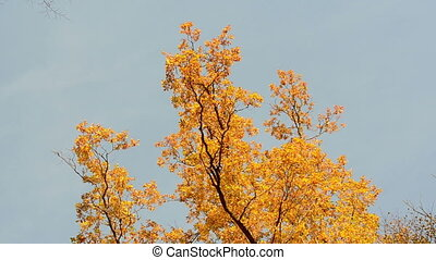 oak tree autumn sky