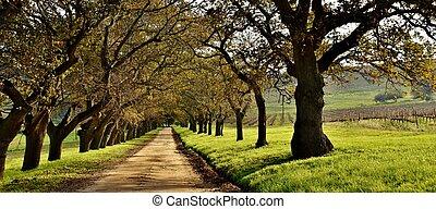 Oak tree Avenue in autumn - Landscape with a Oak tree Avenue...