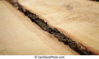 oak tree bark texture wood