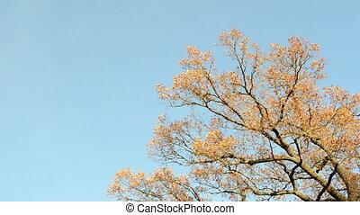 oak tree branch autumn