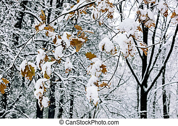 oak tree branches with autumn leaves covered with white fluffy snow