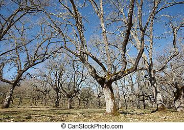 Oak tree forest in Cabaneros park, Spain