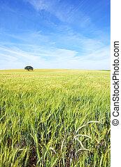Oak tree in a wheat field at Portugal.