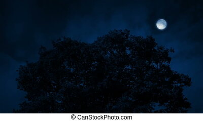 Oak Tree In Breeze At Night - Dramatic night scene with...