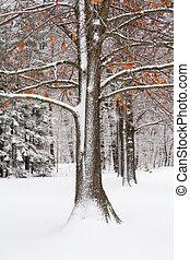 Oak Tree in Fresh Snow