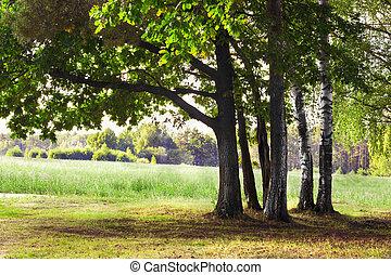 oak tree in rays of the sun