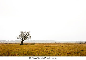 oak tree in rural landscape