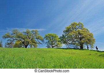 Oak Tree in spring
