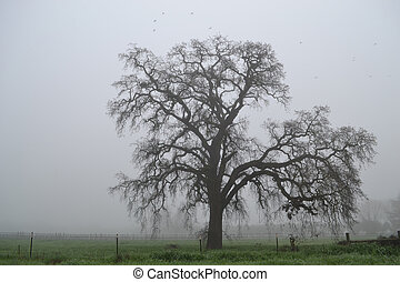 Oak tree in the winter