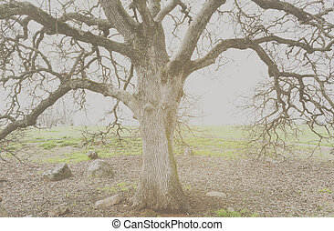 Oak Tree in the Winter with Vintage Filter