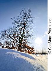 Oak tree in winter in clear weather.