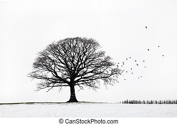 Oak tree in a field of snow in winter with a flock of birds, against a white sky background.