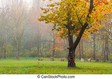oak tree in yellow foliage on the grassy meadow. lovely...