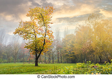 oak tree in yellow foliage on the grassy meadow