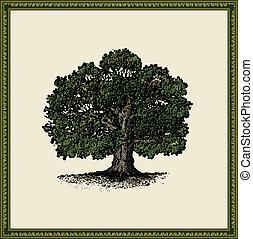 oak tree isolated on light background