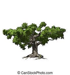 Oak tree isolated. Vector illustration