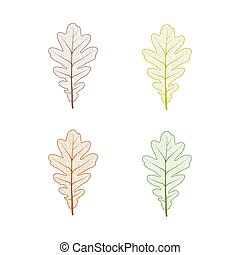 Oak tree leaf set. Autumn leaves isolated vector illustration on white background. Fall decoration clip art