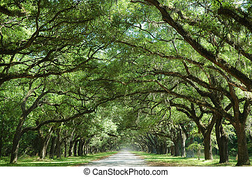Oak Tree Lined Country Road