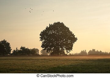 Oak tree on a misty morning