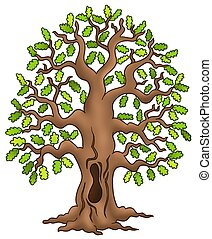 Oak tree on white background - color illustration.