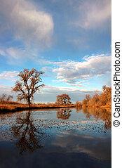 Oak Tree Reflection