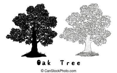 Oak Tree Silhouette, Contours and Inscriptions