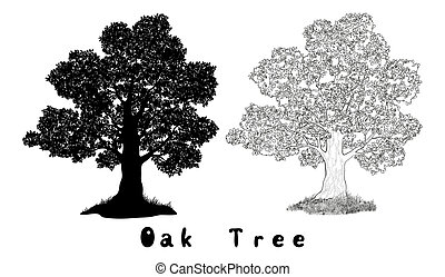 Oak Tree Silhouette, Contours and Inscriptions - Oak Tree...