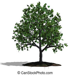 oak tree - rendering of a tree with shadow and lipping path...
