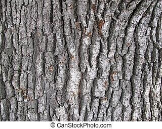 oak-tree texture